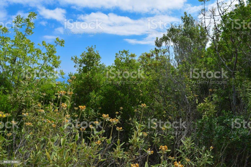 Beydaglari Parque Nacional costero (Sahil Milli este - parque de Olympos). Naturaleza salvaje de la región costera mediterránea de Turquía foto de stock libre de derechos