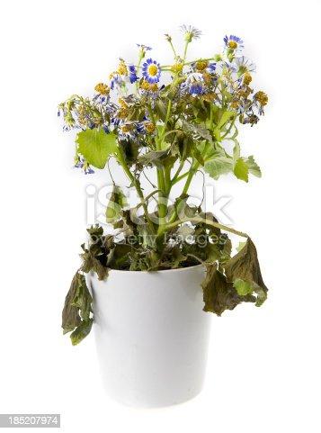 neglected pot plant