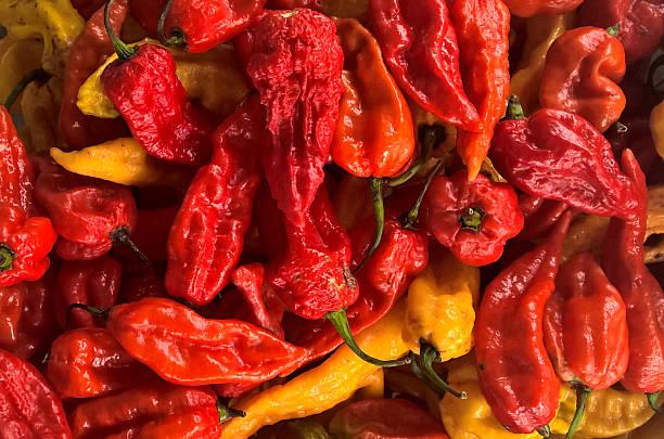 Bhut Jolokia Red Pepper stock photo