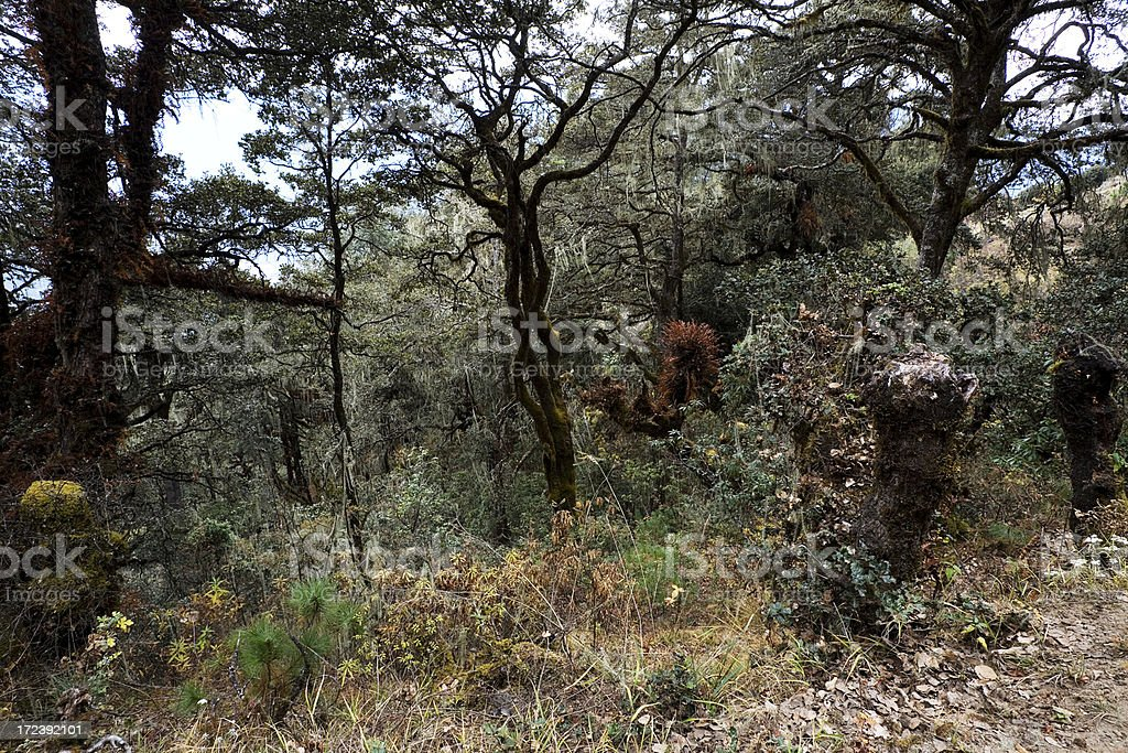 Bhutanese Forest royalty-free stock photo