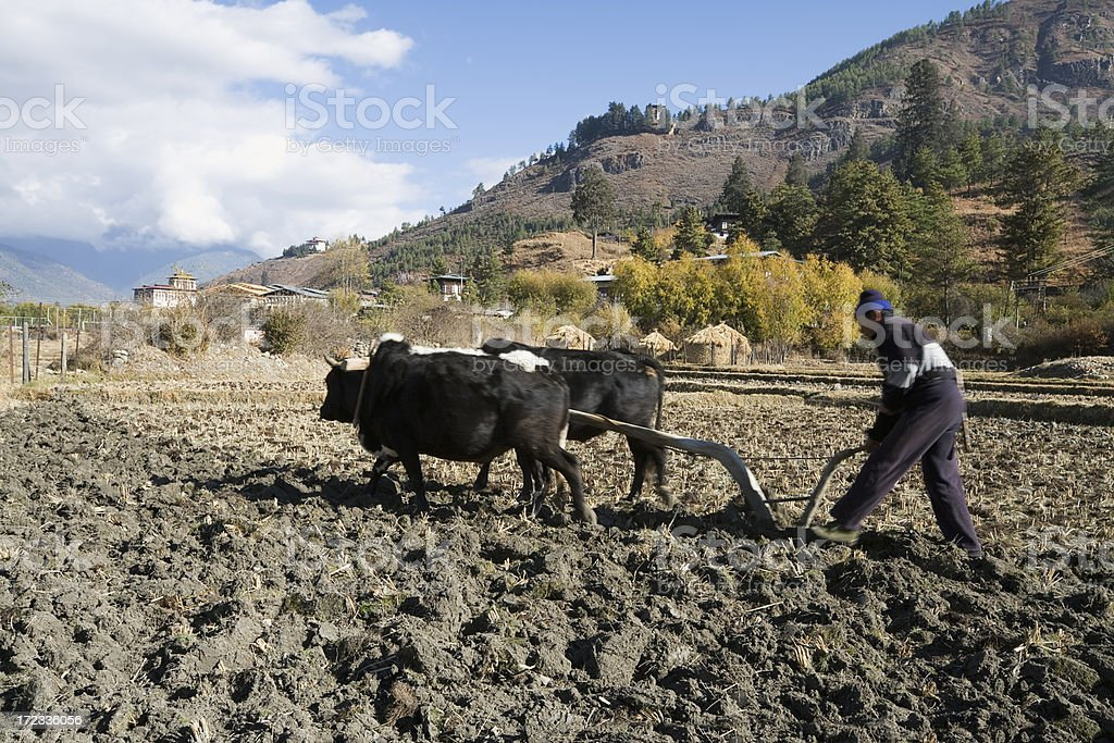 Bhutanese Ploughing royalty-free stock photo