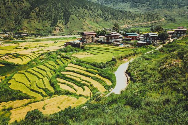 Bhutanese village and terraced field at Punakha, Bhutan stock photo