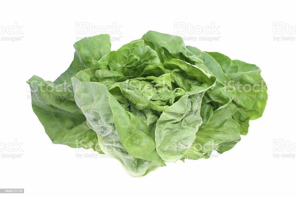bibb lettuce royalty-free stock photo