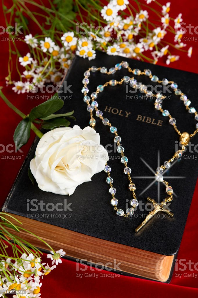 Velvet star роза шнурки резинки для обуви взрослые с фиксатором