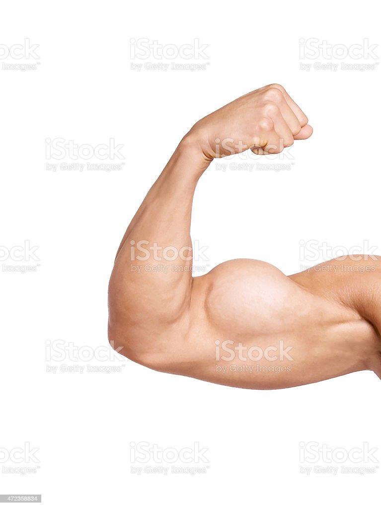 Bíceps isolado no fundo branco - foto de acervo
