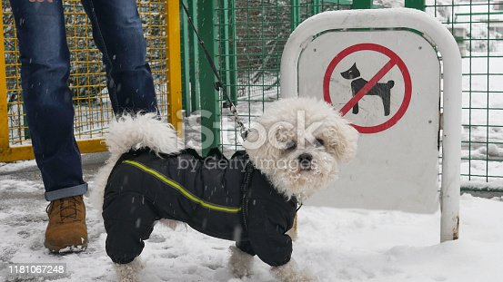 istock Bichon Frise dog in winter jacket stands with his owner in front of the sign No dogs allowed during the snowy winter. 1181067248