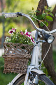 Bicycle decorated with flowers as a decorative element in the garden