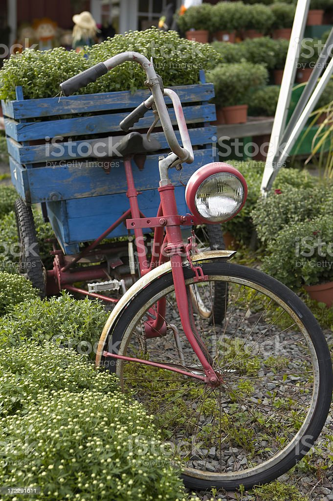 bicycle delivery stock photo