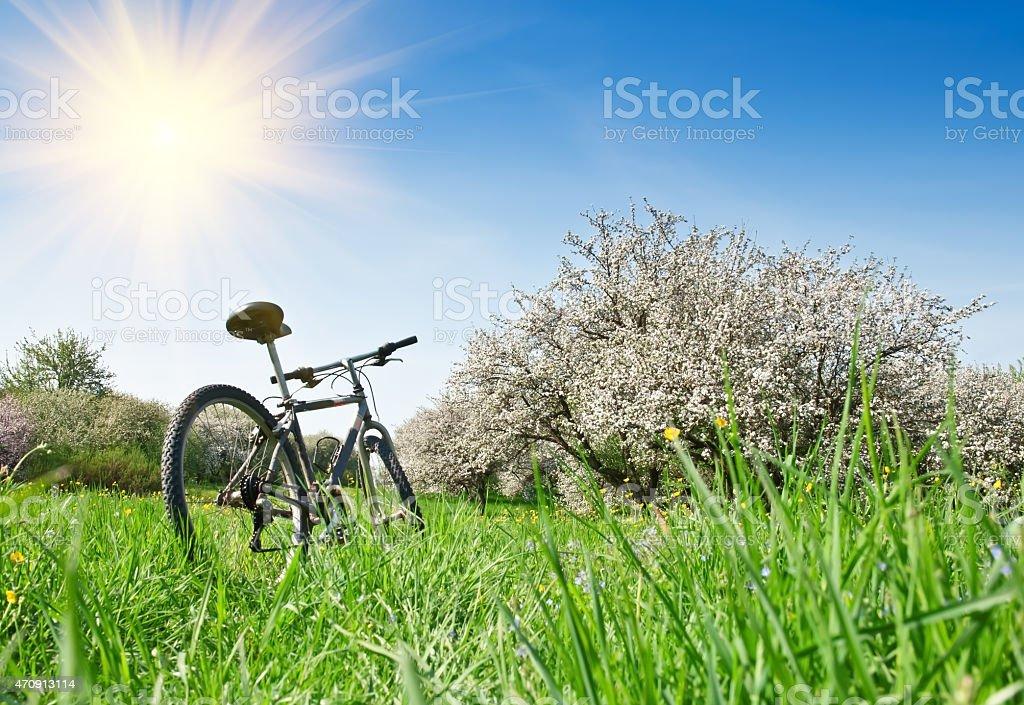 Велосипед в apple в сад стоковое фото