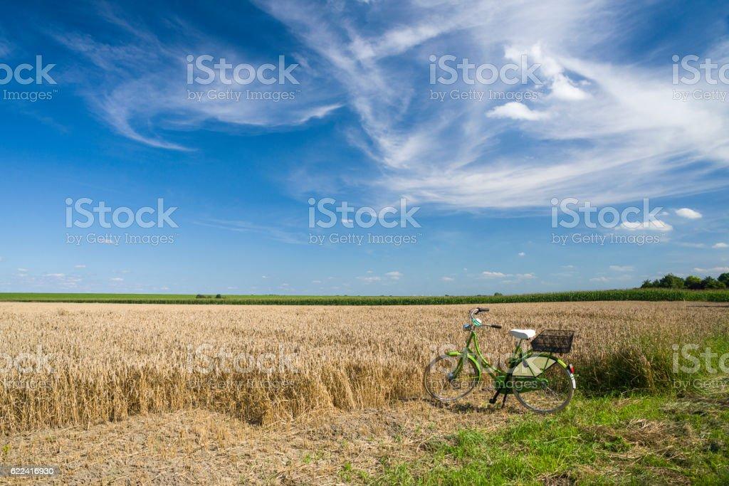 Bicycle in ripe wheat field under blue summer sky – Foto