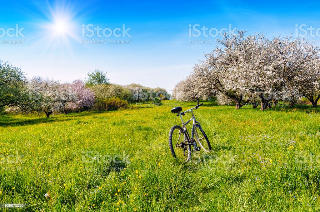 bicycle in spring blooming garden стоковое фото