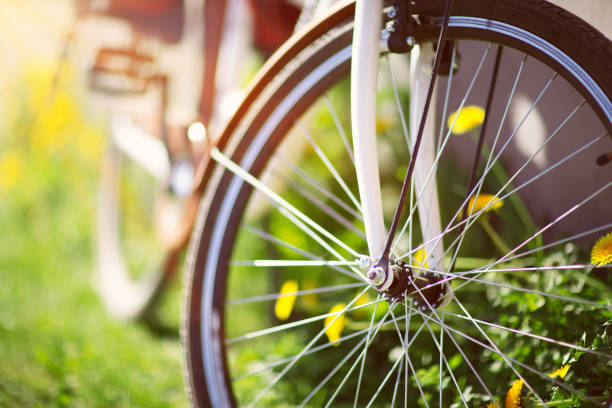 bicycle in the forest in spring stock photo