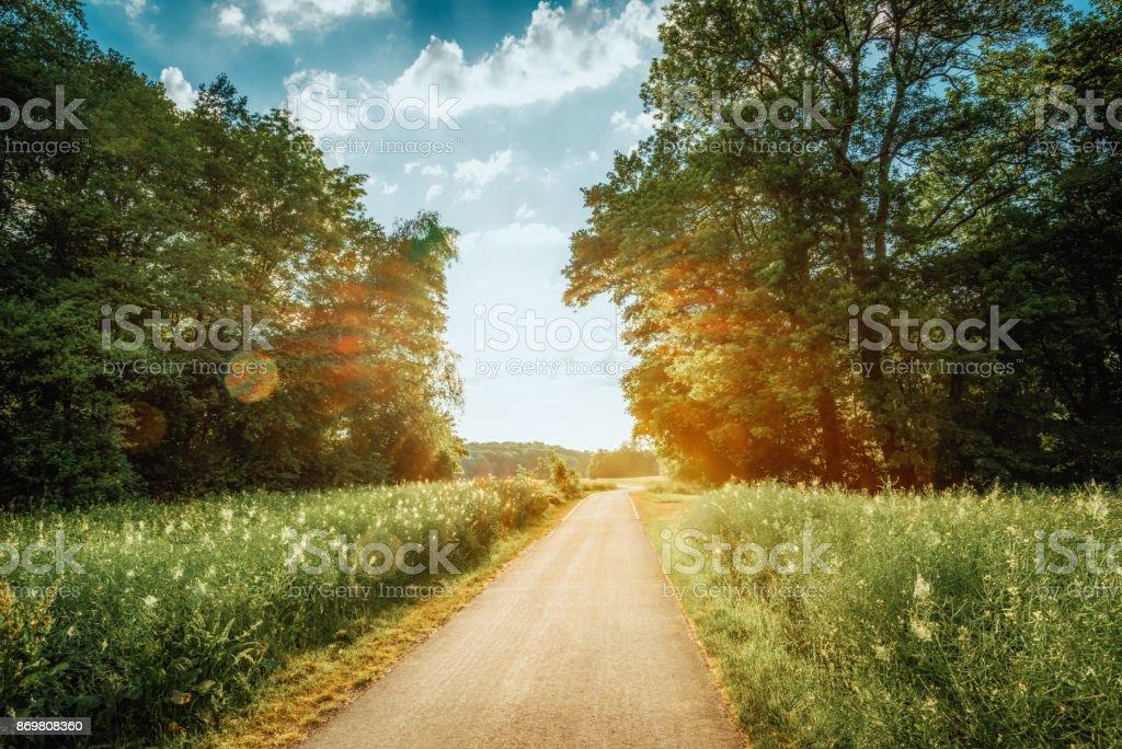 Fahrradweg entlang der Wiese umgeben von Wald – Foto