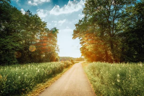 fahrradweg entlang der wiese umgeben von wald - radwege deutschland stock-fotos und bilder
