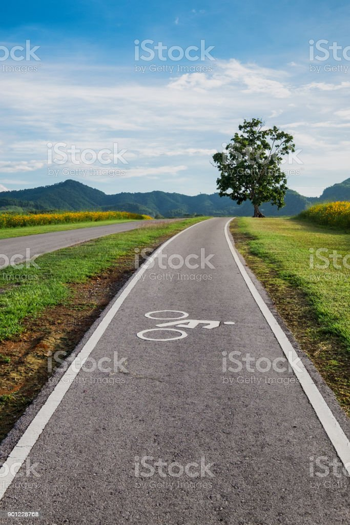 Bicycle lane, asphalt road and big green tree on green meadow with blue sky background stock photo