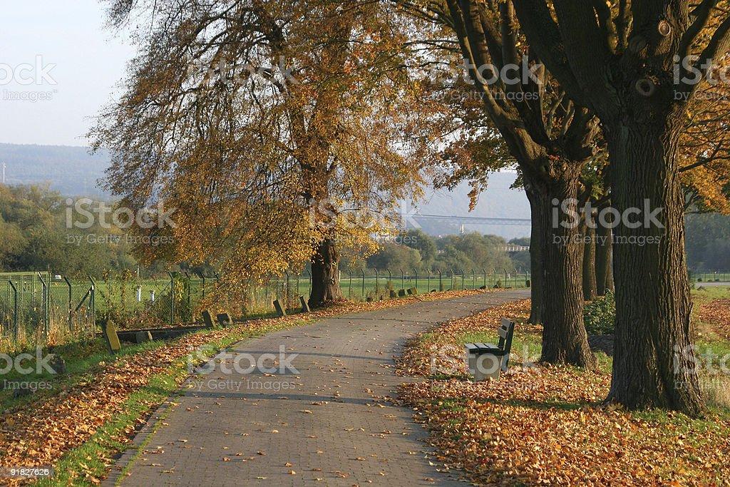 Bicycle lane in autumn royalty-free stock photo