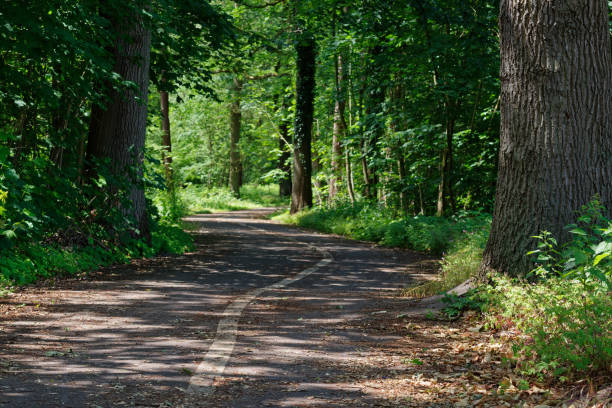 Bicycle lanes on an asphalt road in the nature stock photo