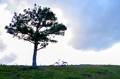 bicycle, lonely tree and couple in the hill at sunset