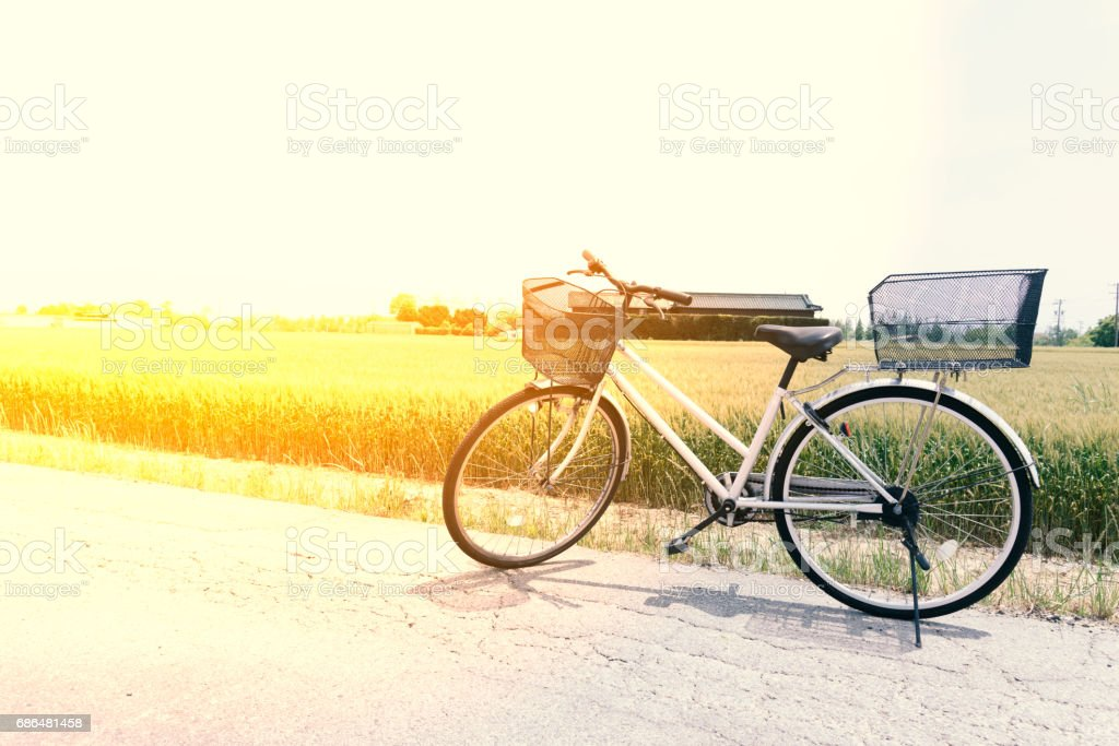 Bicycle  on the road and rice field stock photo