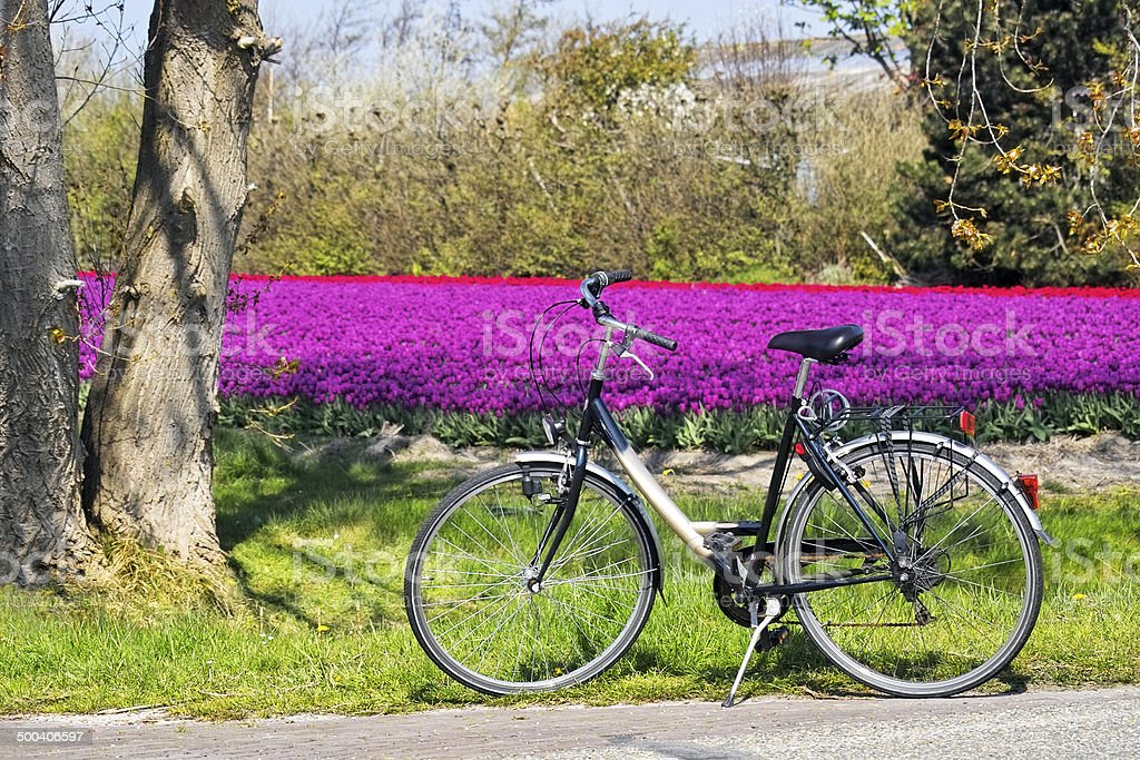 Bicycle parked in front of a field of tulips stock photo