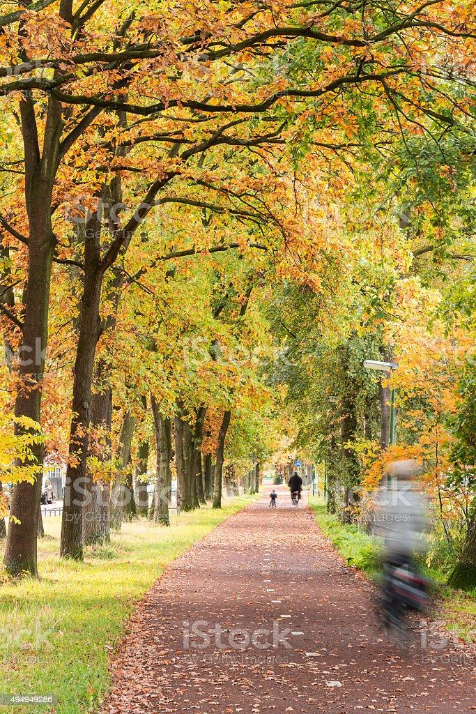 Radweg in den Herbst. – Foto