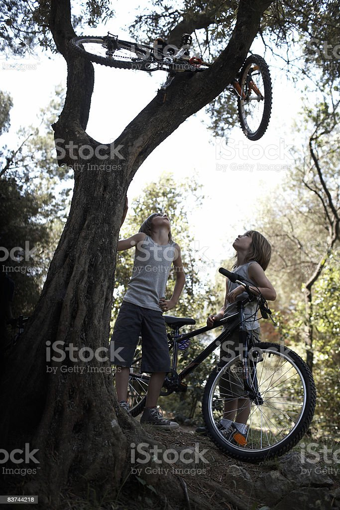 bicycle stuck in a tree royalty-free stock photo