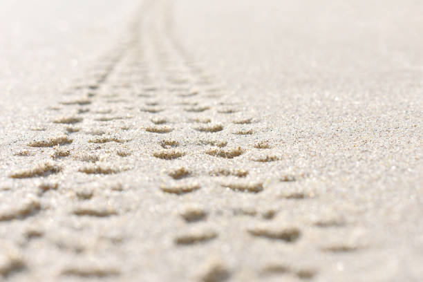 bicycle tracks on the sand - bike tire tracks foto e immagini stock