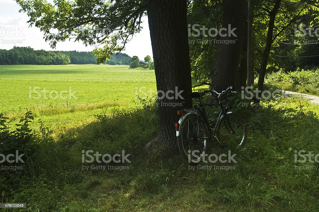 Bicycle under a tree. royalty-free stock photo