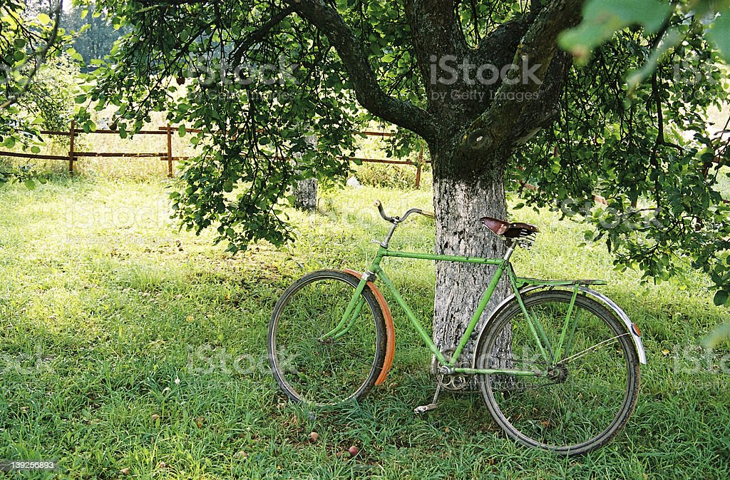 Bicycle  under an apple-tree royalty-free stock photo