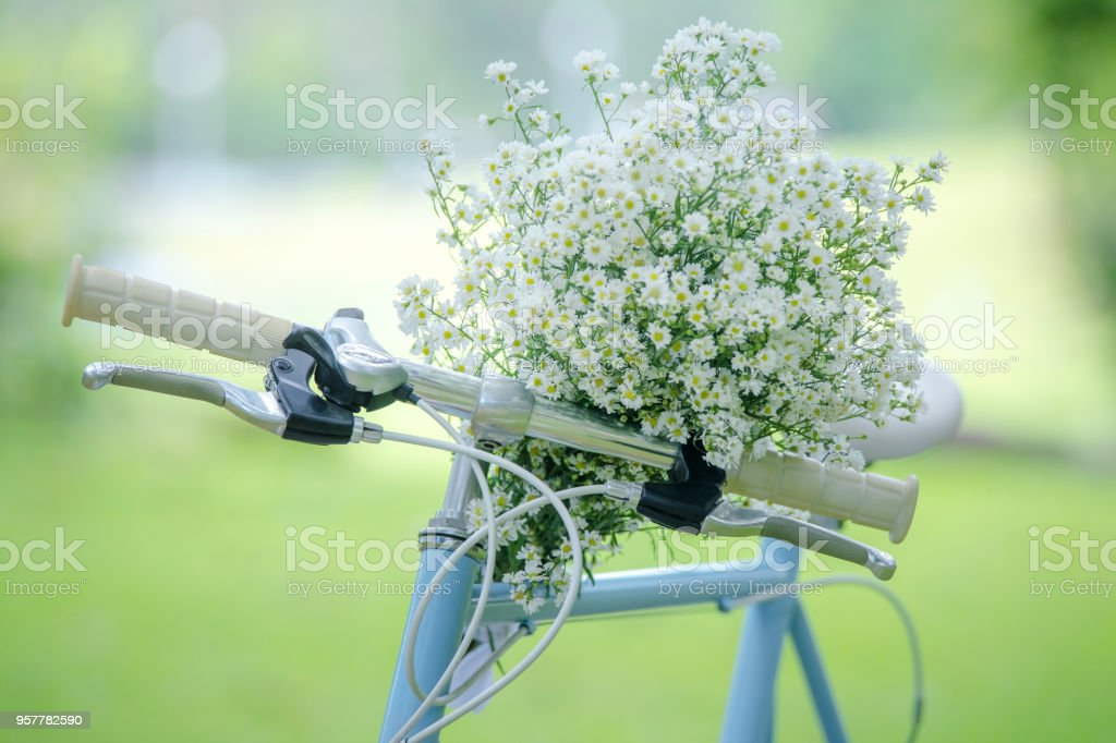 Bicycle with a bouquet of flowers on front of handlebar on a background of green. стоковое фото