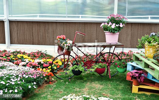 Bicycle with flowers in the garden.