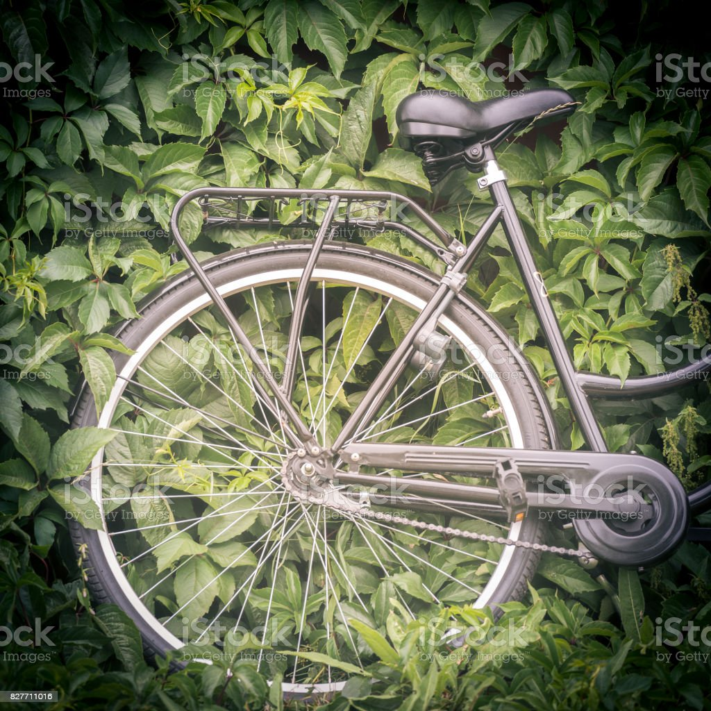 Bicycle with green foliage in background. Sweden, Scandinavia, Europe стоковое фото