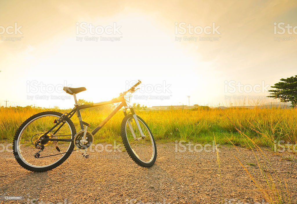 Bicycle with sunlight in the field stock photo