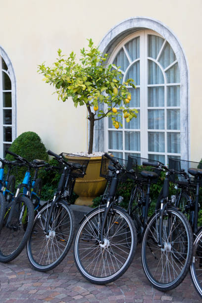 Bicycles and lemon tree in the tub stock photo