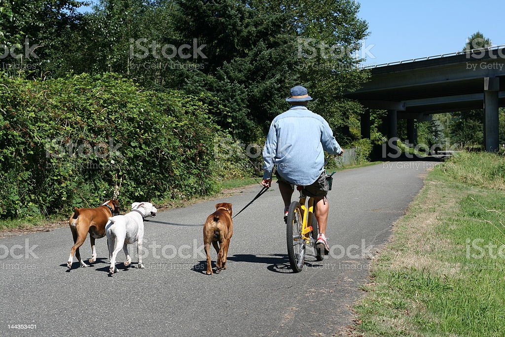 Bicycling with Dogs stock photo