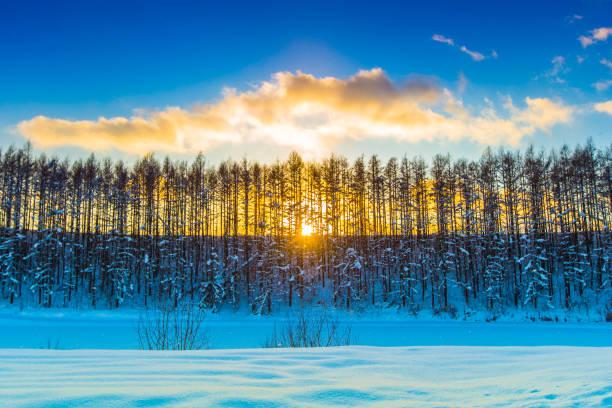 冬の美瑛北海道 - 雪景色 ストックフォトと画像