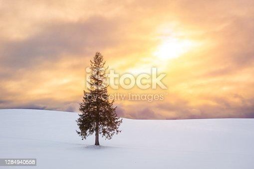 Biei, Hokkaido, Japan at the Christmas Tree in winter.