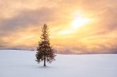 istock Biei, Hokkaido, Japan in Winter 1284940558