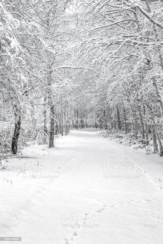 美瑛の冬景色 ストックフォト