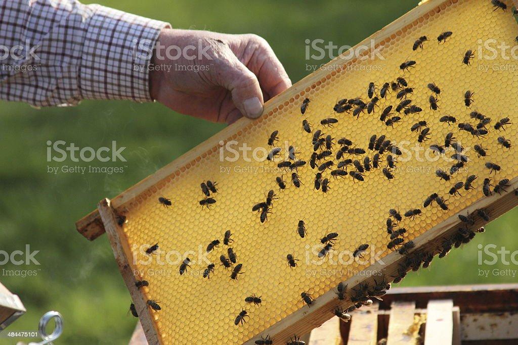 Bienen1 stock photo