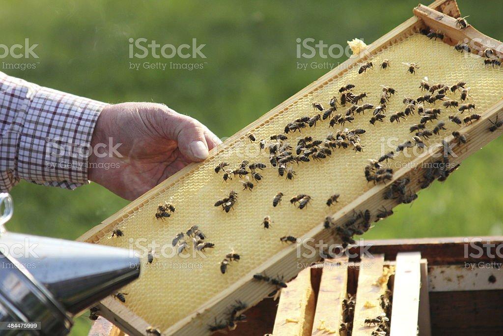 Bienen2 stock photo