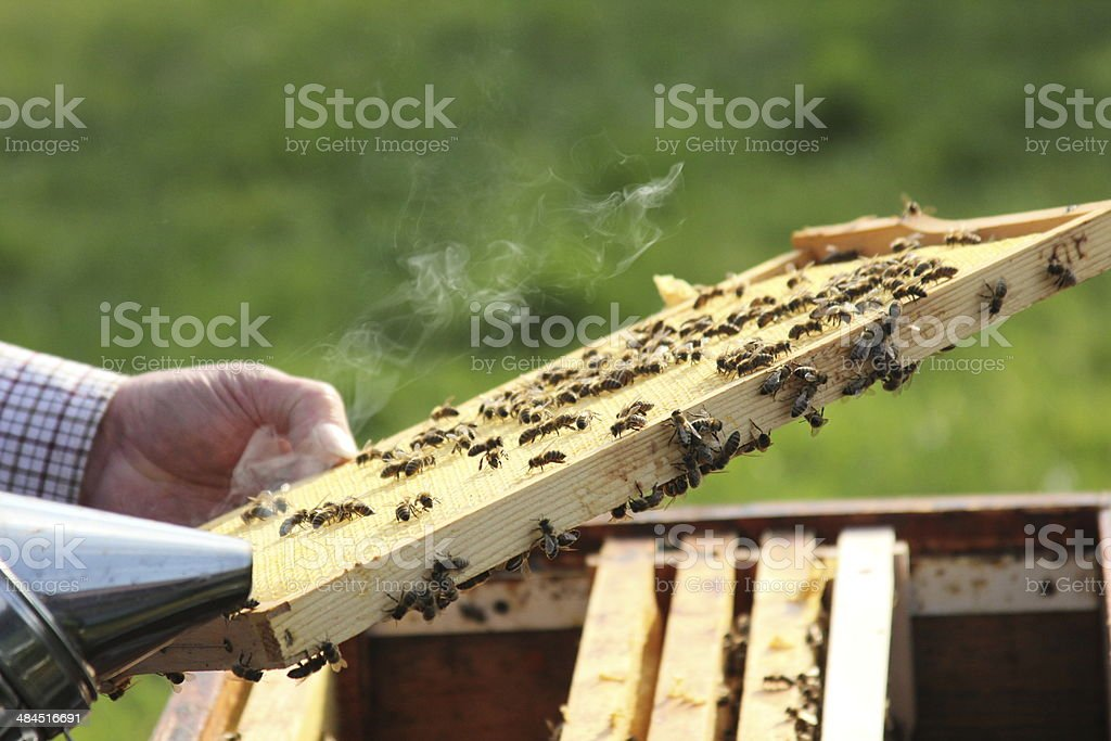 Bienen3 stock photo