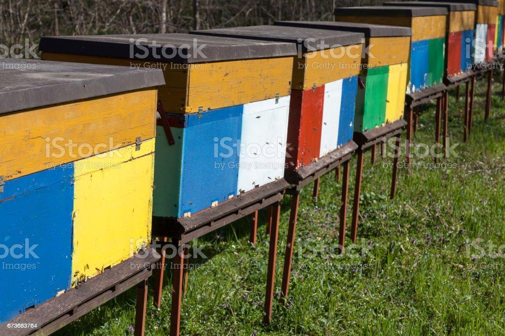 Bienenstöcke stock photo