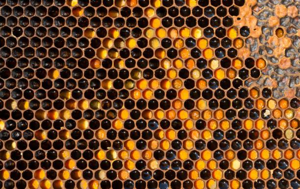 Bienenwabe – Foto