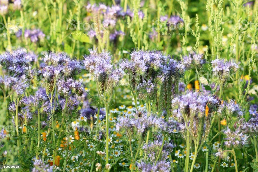 Bienenweide stock photo