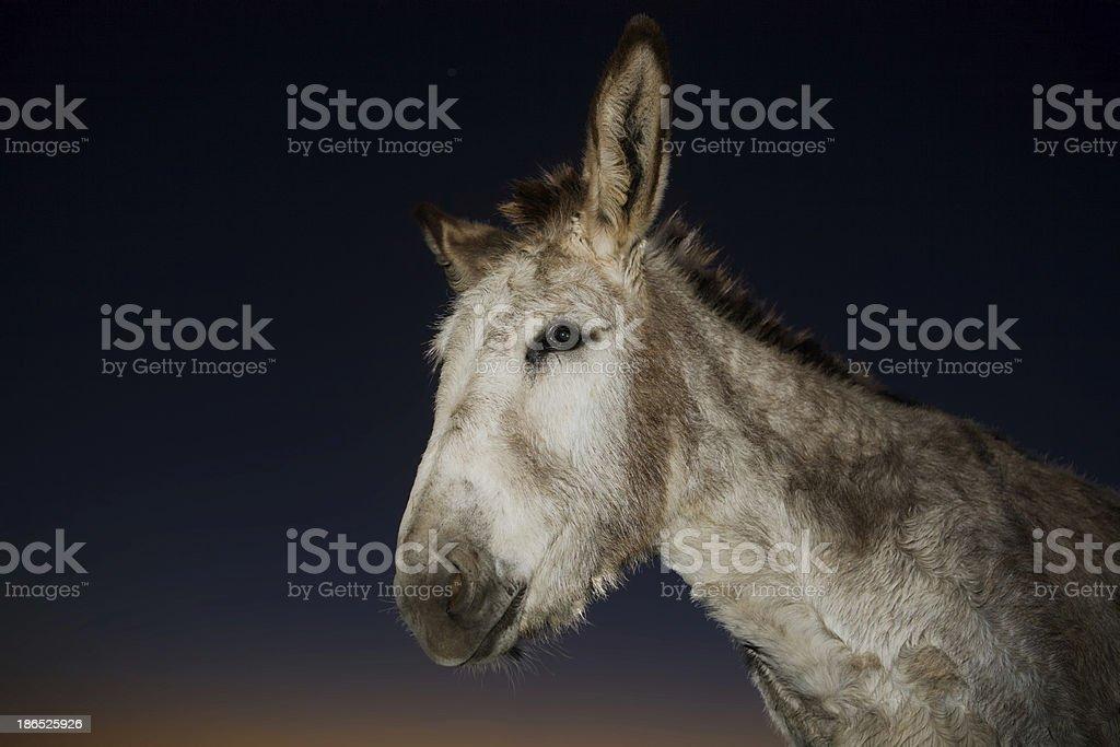 Bienvenido ass stock photo