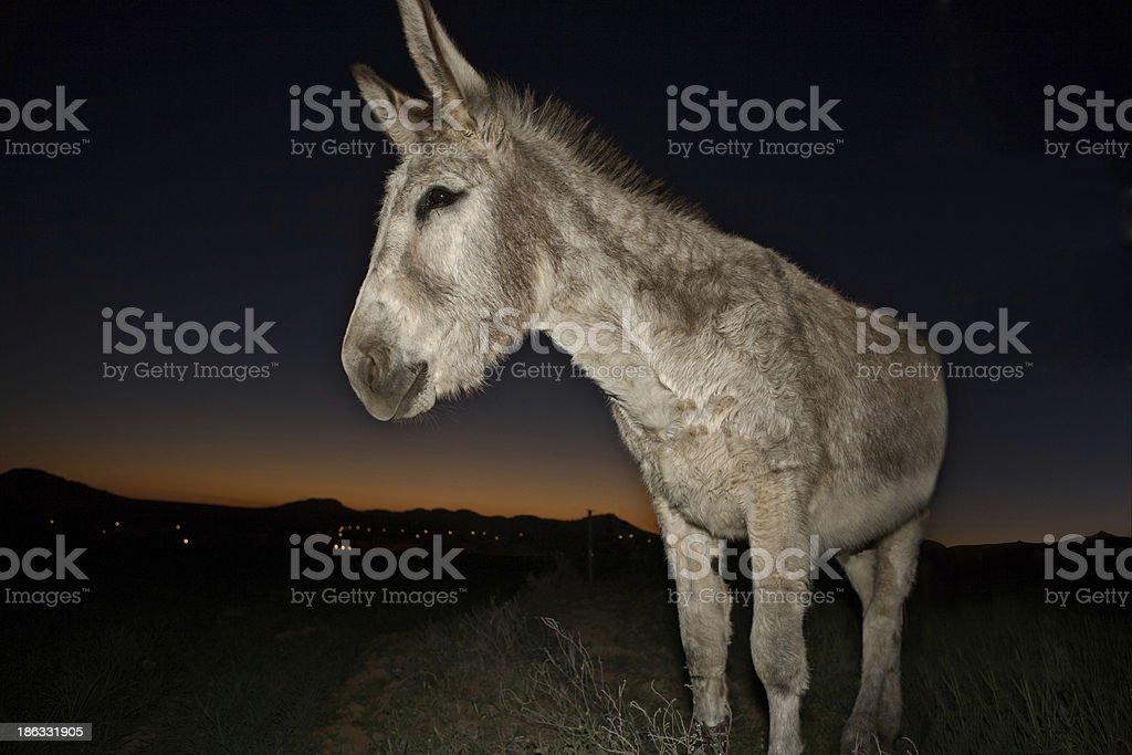 Bienvenido donkey portrait stock photo