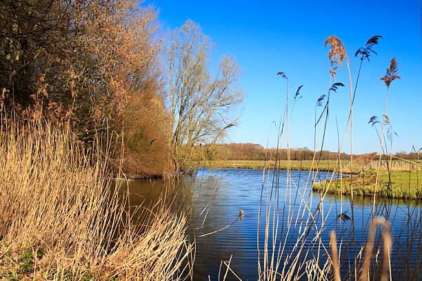 Biesbosch national park stock photo