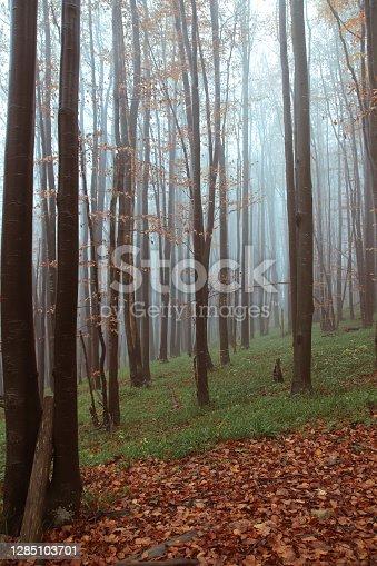istock Bieszczady Mountains 1285103701