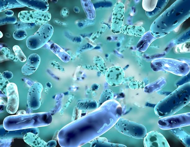 bifidobacterium, bacterial strain3d illustration. - stomach stock pictures, royalty-free photos & images